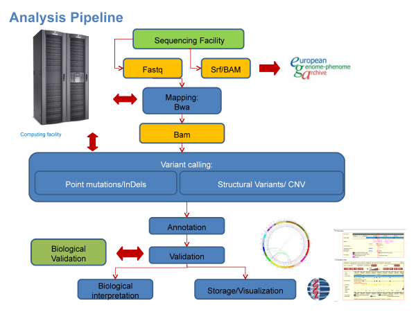synergie analysis pipeline
